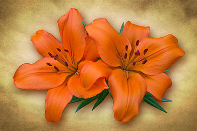 Photograph - Orange Lily by Jane McIlroy