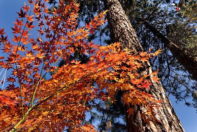 Maple Leaf Art Digital Art - Orange Maple by Kathleen Bishop