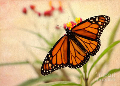 Photograph - Orange Mariposa by Sabrina L Ryan