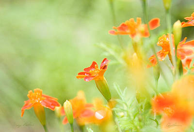 Orange Meadow Art Print