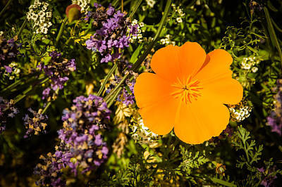 Photograph - Orange by Michele Wright