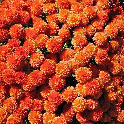 Photograph - Orange Mums by Duane McCullough