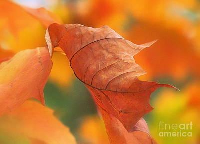 Photograph - Orange Music by France Laliberte