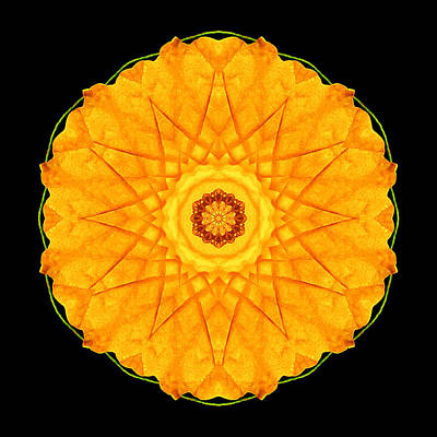 Print featuring the photograph Orange Nasturtium Flower Mandala by David J Bookbinder