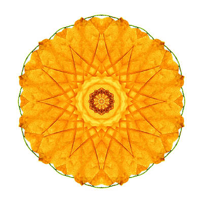 Photograph - Orange Nasturtium I Flower Mandala White by David J Bookbinder