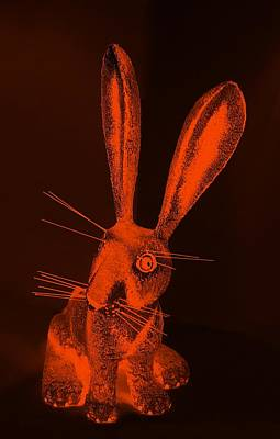 Photograph - Orange New Mexico Rabbit by Rob Hans