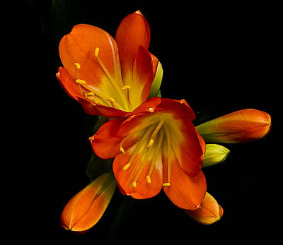 Photograph - Orange On Black by Bill Barber