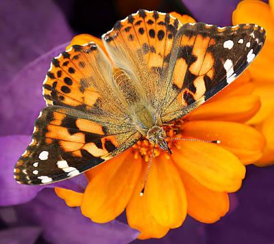 Photograph - Orange On Purple by Jaki Miller