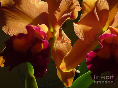 Photograph - Orange Orchid by Mukta Gupta
