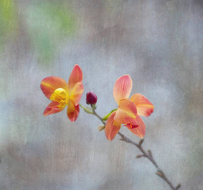 Photograph - Orange Orchids by Kim Hojnacki