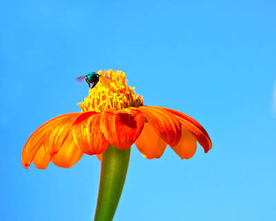 Photograph - Orange Pop Flower Cafe by Mark Andrew Thomas