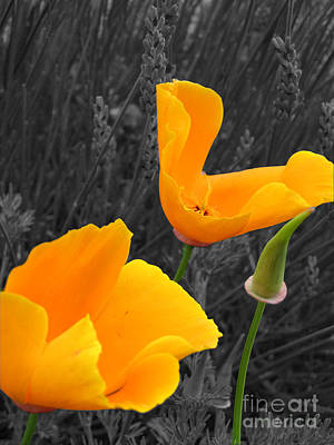 Photograph - Orange Poppies by Amber Nissen