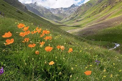 Wild Turkey Photograph - Orange Poppies On A Mountainside by Bob Gibbons