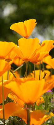 Daisy Digital Art - Orange Poppies On Top by WDM Gallery