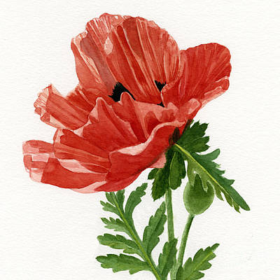 Orange Poppy Painting - Orange Poppy Blossom Square Design by Sharon Freeman