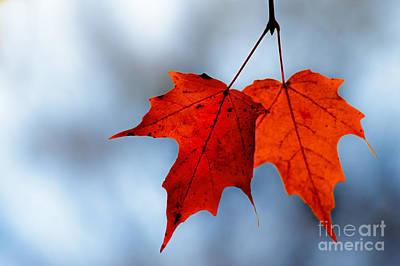 Photograph - Orange Pops by Michael Arend
