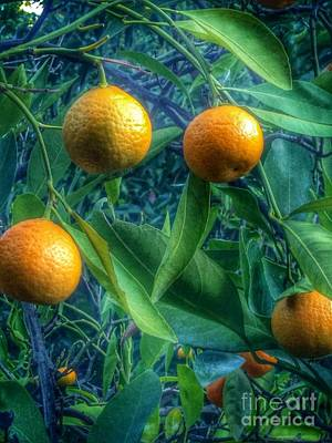 Photograph - Orange Ready by Susan Garren