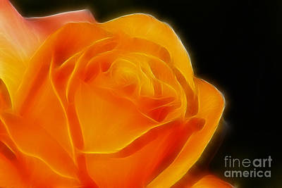 Orange Rose 6308 Art Print by Gary Gingrich Galleries