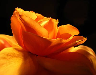 Photograph - Orange Rose Glowing In The Night by Jennie Marie Schell