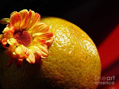 Photograph - Orange by Sarah Loft