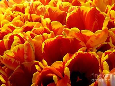 Orange Sea Art Print by Lauren Leigh Hunter Fine Art Photography