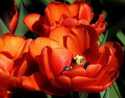 Photograph - Orange Sensation by Bruce Bley