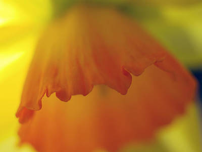 Photograph - Orange Shade Of Poppy by Joe Schofield