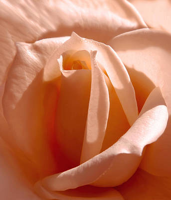 Photograph - Orange Sherbet Rose by Jennie Marie Schell