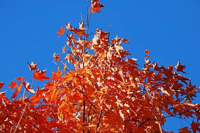 Photograph - Orange Sky by Lorena Mahoney