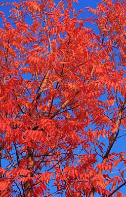 Photograph - Orange Sky  by Mike Sangh