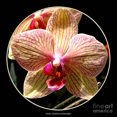 Photograph - Orange Striped Orchid by Rose Santuci-Sofranko