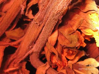 Orange Sunfloer Original