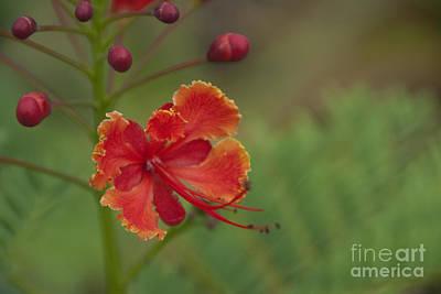 Photograph - Orange Sunrise by Jackie Farnsworth