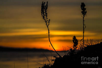 Photograph - Orange Sunset by Arlene Sundby
