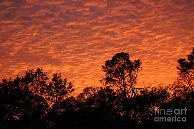 Photograph - Orange Sunset by D Wallace