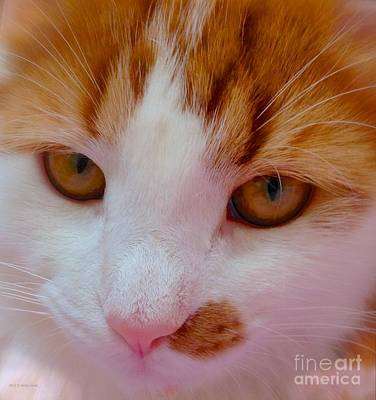 Photograph - Orange Tabby Kitten by Anita Lewis