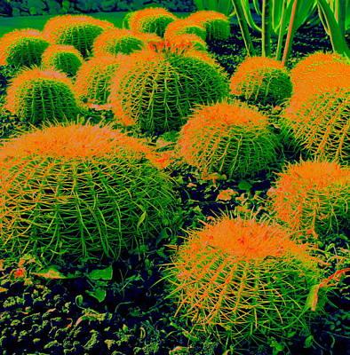 Desert Digital Art - Orange Top Barrel Cactus by Randall Weidner