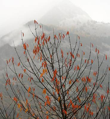 Photograph - Orange Tree Snow Mountain by Phoenix De Vries