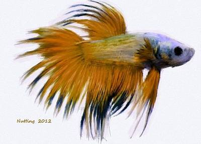 Airport Maps - Orange Tropical Fish by Bruce Nutting