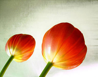 Photograph - Orange Tulip Pops by Julie Magers Soulen