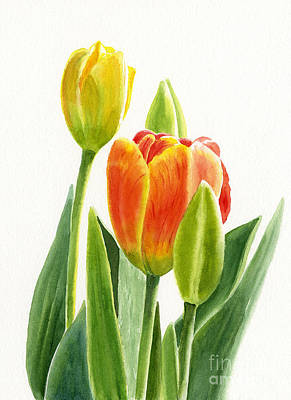 Illustration Art Painting - Orange Tulip With Buds by Sharon Freeman