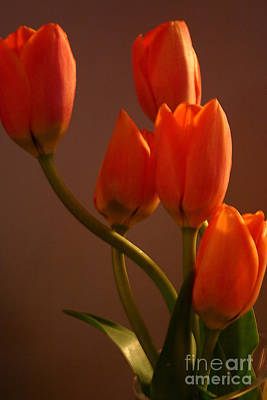 Photograph - Orange Tulips by Alyce Taylor