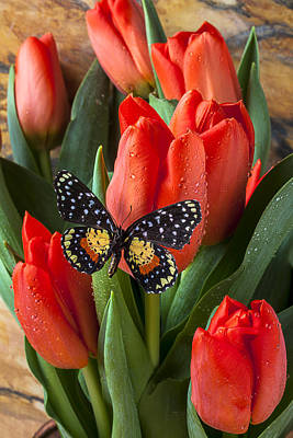 Orange Tulip Photograph - Orange Tulips And Butterfly by Garry Gay