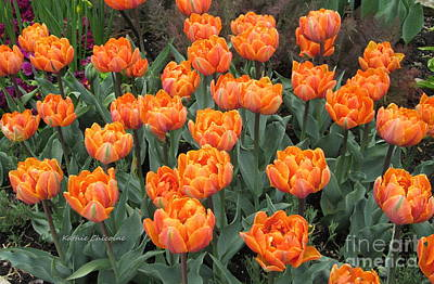 Photograph - Orange Tulips by Kathie Chicoine