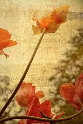 Photograph - Orange Tulips  by Michelle Calkins