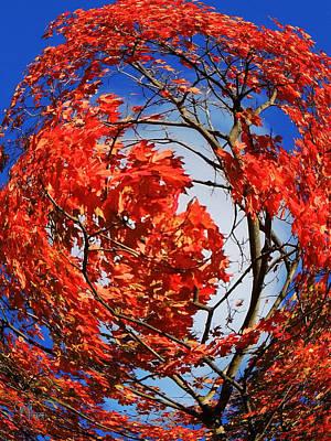 Photograph - Orange Twirl -2 Twin by Glenn Feron