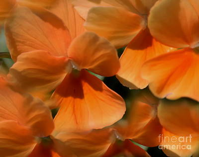 Photograph - Orange Violas by Erica Hanel