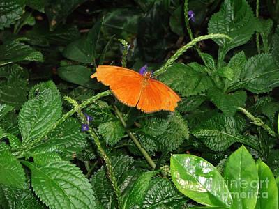 Photograph - Orange Wonder by Luther Fine Art