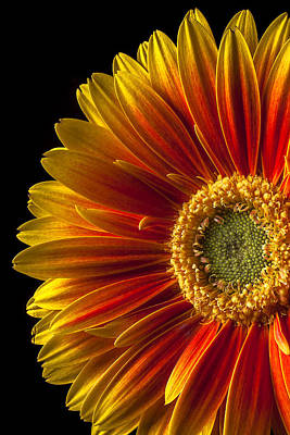 Orange Yellow Mum Close Up Art Print by Garry Gay