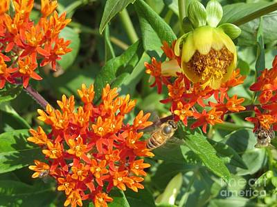 Photograph - Orange You Happy Honey Bees? by Kimberlee Baxter